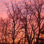 Day 6 - Pink Morning